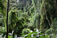 Tropical cloudforest 8 royalty free stock photo