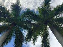Tropical cloudy day. Palm Trees in the clouds royalty free stock images