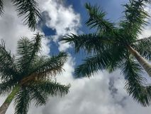 Tropical cloudy day. Palm Trees in the clouds royalty free stock photos