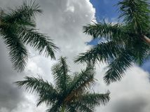 Tropical cloudy day. Palm Trees in the clouds stock photo