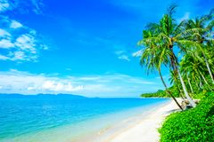 Tropical coast, beach with hang palm trees. Vacation concept Royalty Free Stock Photos