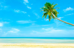 Tropical coast, beach with hang palm trees. Stock Photos