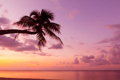 Tropical coast with coconut palm tree Royalty Free Stock Images