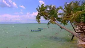 The tropical coast with exotic coconut green palm trees. The tropical coast with exotic coconut green palm trees with azure sea water stock video footage