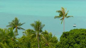 The tropical coast with exotic coconut green palm trees with azure sea water. Meditative iddyllic calm resort seascape. Paradise beach from above. Dream island stock video footage