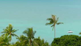 The tropical coast with exotic coconut green palm trees with azure sea water. Meditative iddyllic calm resort seascape. Paradise beach from above. Dream island stock video