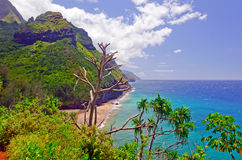 Tropical coast in Hawaii Royalty Free Stock Photo