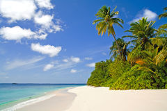 Tropical coastline royalty free stock photography