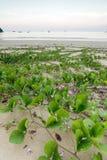 Tropical coastline Stock Photography