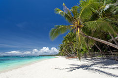 Tropical coastline with beautiful palm and white sand Stock Photo