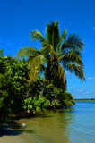 Tropical coastline with palm trees. Palm trees overhang a Florida coast Stock Image