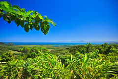Tropical coastline. With a view to the ocean across dense lush green vegetation on a sunny summer day Royalty Free Stock Image