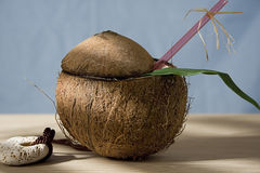 Tropical cocktail. With rum in a coconut Royalty Free Stock Images