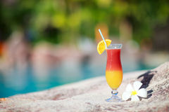 Tropical cocktail and frangipani flower royalty free stock image