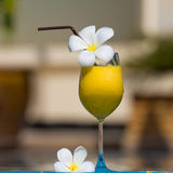 Tropical cocktail Royalty Free Stock Image