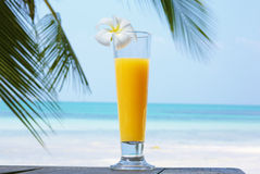 Tropical cocktail on the tropical background. Stock Photography