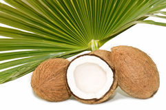 Tropical coconut Stock Photo