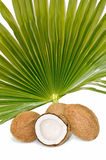 Tropical coconut Royalty Free Stock Photo
