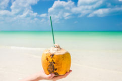 Tropical coconut on palm against turquoise sea Royalty Free Stock Photography