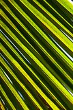 Coconut leaves in sunlight. royalty free stock images