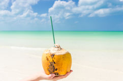 Tropical coconut on palm against a background of turquoise sea Stock Image