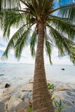 Tropical coconut palm on the sea Royalty Free Stock Photos