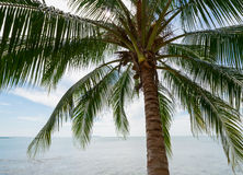 Tropical coconut palm on the sea Stock Photography