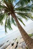 Tropical coconut palm on the sea Royalty Free Stock Photography