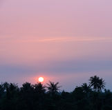 Tropical coconut palm sunset Royalty Free Stock Photos