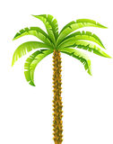 Tropical coconut palm tree with green leaves vector illustration. Eps10  on white background Royalty Free Stock Photos