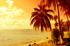 Tropical coconut palm tree sunset Stock Photo