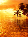 Tropical coconut palm tree sunset Royalty Free Stock Images