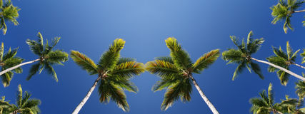 Tropical Coconut Palm Trees Background Stock Photo