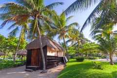 Tropical coconut palm trees at the beach. Hut jungle caribbean vacation mexican mexico coastline day destination exotic green holiday hot idyllic island royalty free stock photography