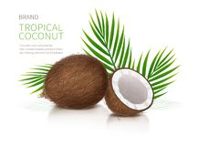 Whole and half broken coco nut. Tropical coconut realistic vector, whole and broken half coco nut and green palm leaves on white glossy background. Mock up royalty free illustration