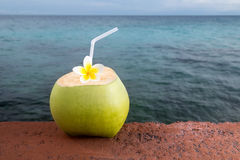 Tropical Coconut Refreshment Stock Images