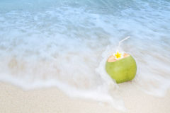 Tropical Coconut Refreshment Royalty Free Stock Image