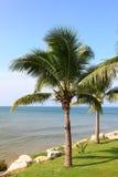 Tropical coconut tree Royalty Free Stock Photos