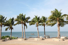 Tropical coconut trees Royalty Free Stock Photo