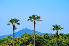 Tropical coconut trees with majestic mountain Stock Image