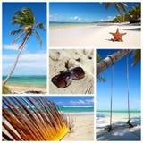 Tropical collage Stock Photos