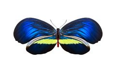 tropical colorful butterfly isolated on white background