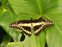 Tropical colorful butterfly stock photo