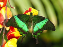 Tropical colorful butterfly stock images