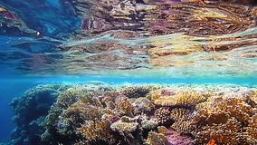 Tropical colorful coral reef underwater. Shot. Undersea coral reef underwater nature wild life stock video footage