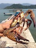 Tropical colorful crab Royalty Free Stock Photos
