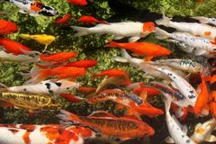 Tropical colorful fish Stock Photos