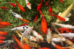 Tropical colorful fish Royalty Free Stock Photo