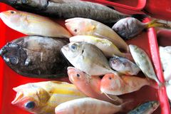 Tropical colorful fish for sale in the market. Royalty Free Stock Image
