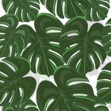 Tropical colorful monstera leaves background. Hand drawn tropic leaf repeated pattern vector illustration